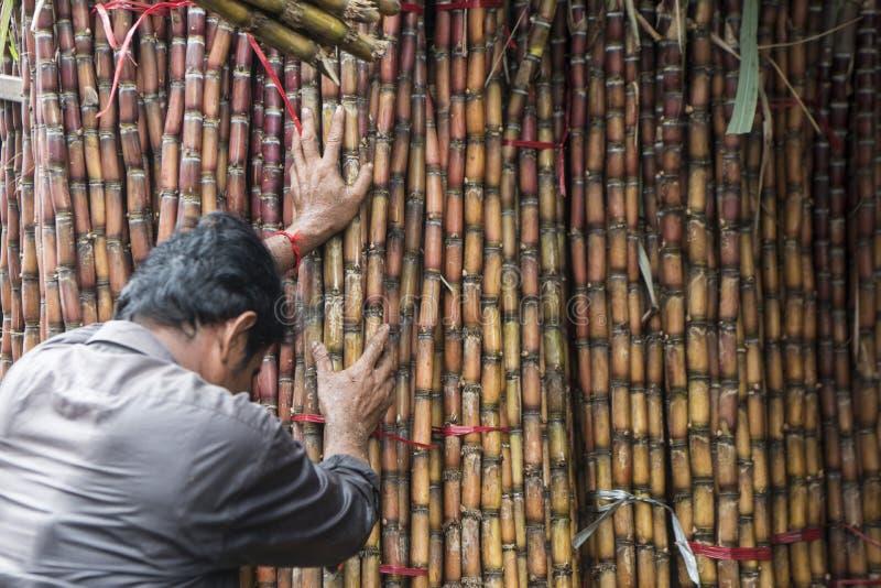 KAMBODŻA PHNOM PENH KANDAL rynku trzcina cukrowa zdjęcia stock