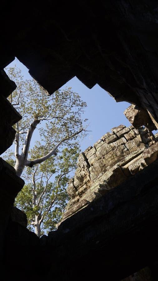 Kambodja Siem oogst royalty-vrije stock afbeelding