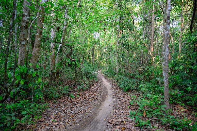 Kambodjansk djungel, bana till och med djungel i Cambodja, väg till och med djungelskog nära Angkor Wat royaltyfria foton