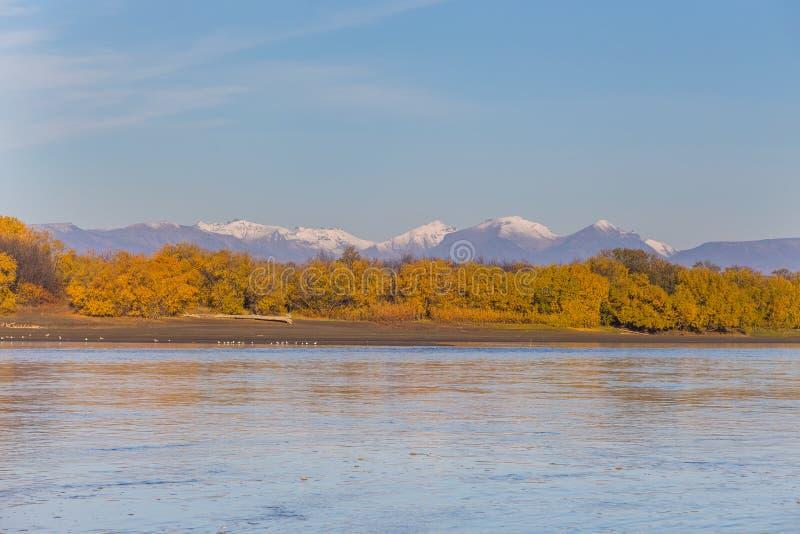 Kamchatka flod Skogen i höstfärger och dekorkade bergmaxima, Kozyriewsk, Ryssland royaltyfria foton
