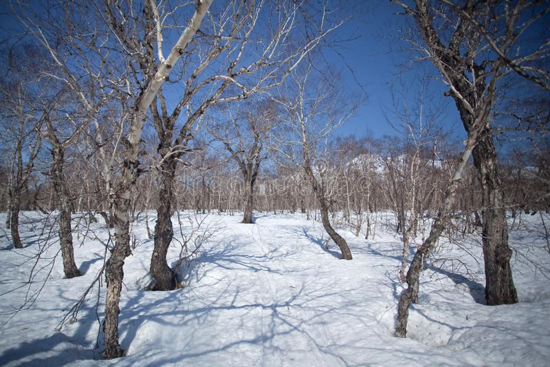 Kamchatka halvö, natur arkivbilder