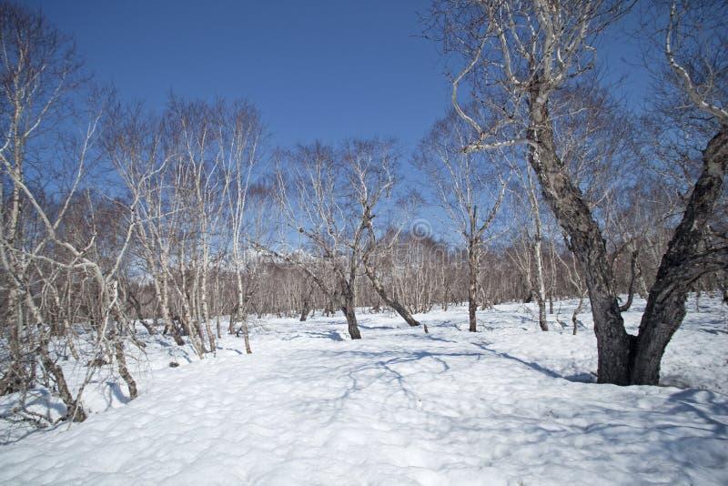 Kamchatka halvö, natur arkivbild