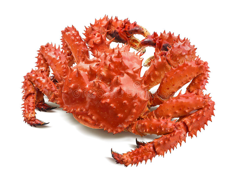 Kamchatka king crab isolated on white. Background, back view royalty free stock photography