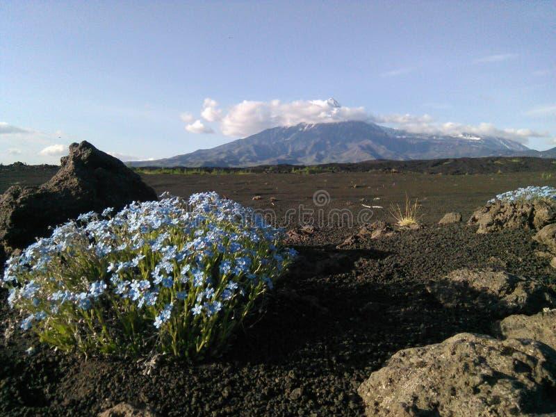 kamchatka Vulkane scharf und flaches Tolbachik lizenzfreies stockbild