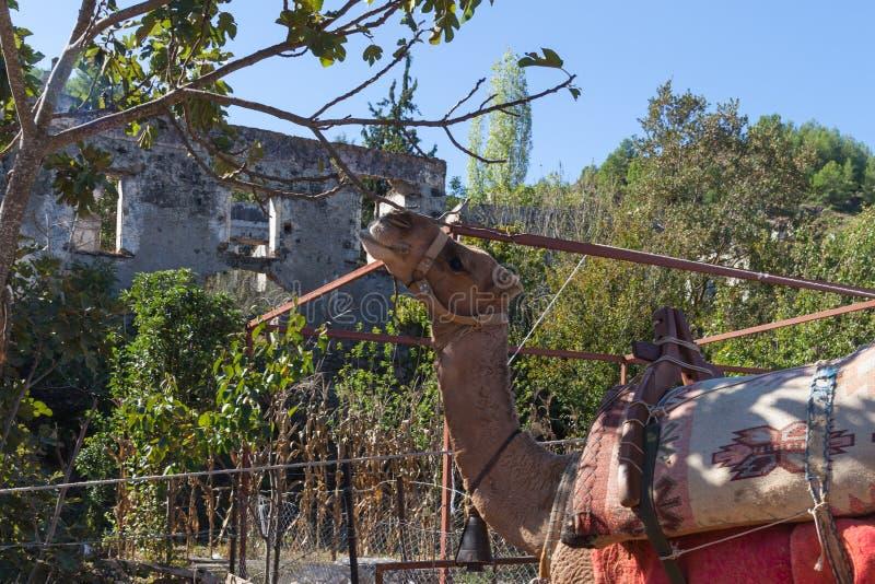 Kameel in de spookstad van Kayakoy royalty-vrije stock afbeelding