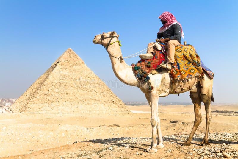 Kameel In Giza Pyramides, Kaïro, Egypte. Redactionele Stock Foto