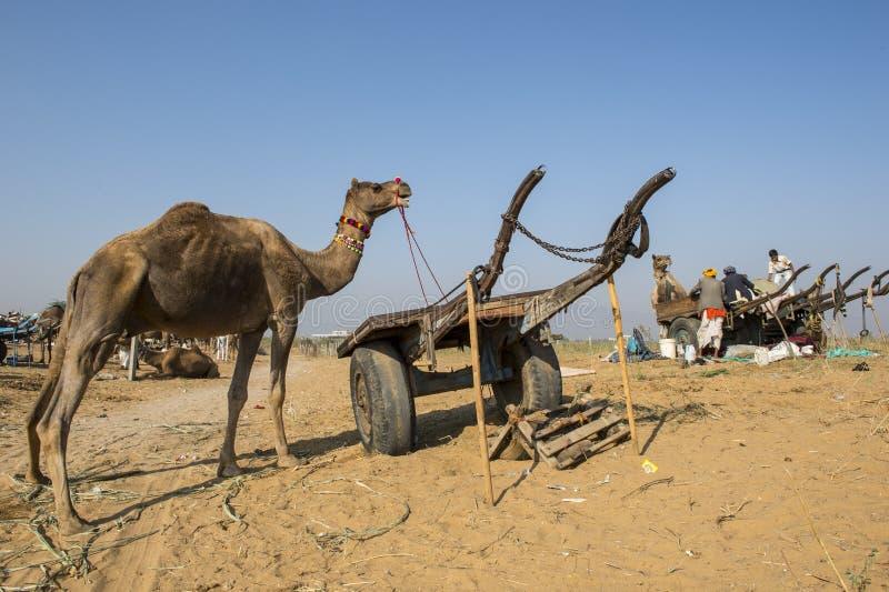 Kameel herder in Pushkar royalty-vrije stock fotografie
