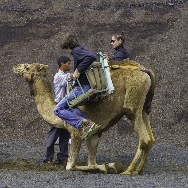 Kameel in het Nationale Park van Timanfaya stock fotografie