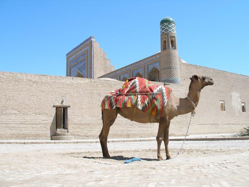 Kameel in Khiva, Oezbekistan royalty-vrije stock afbeelding