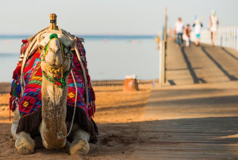 Kameel in kleurrijk zadel bij brug met toeristen royalty-vrije stock fotografie