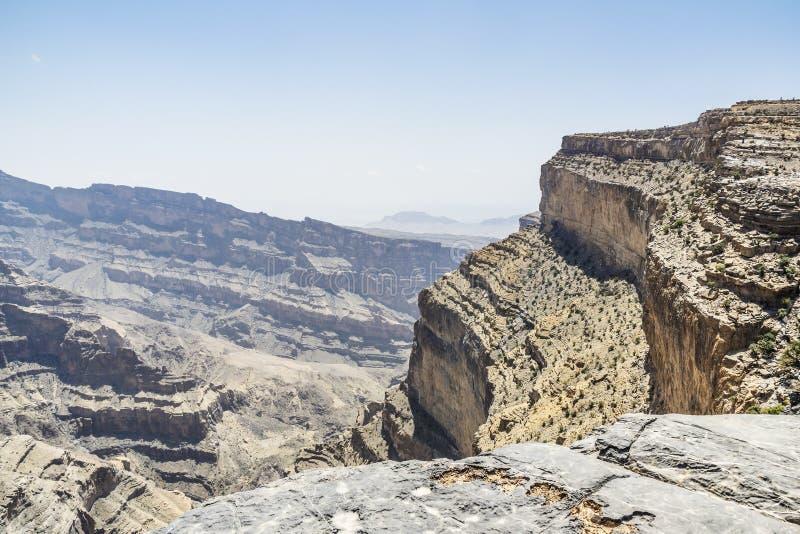 Kameel in Wahiba Oman royalty-vrije stock foto