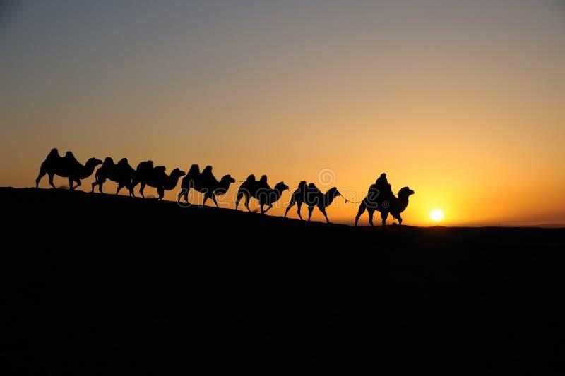 Kameelcaravan bij zonsopgang stock foto's