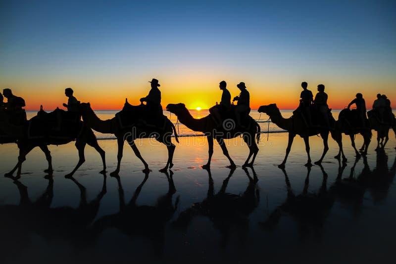 Kameelcaravan op het strand bij zonsondergang royalty-vrije stock foto
