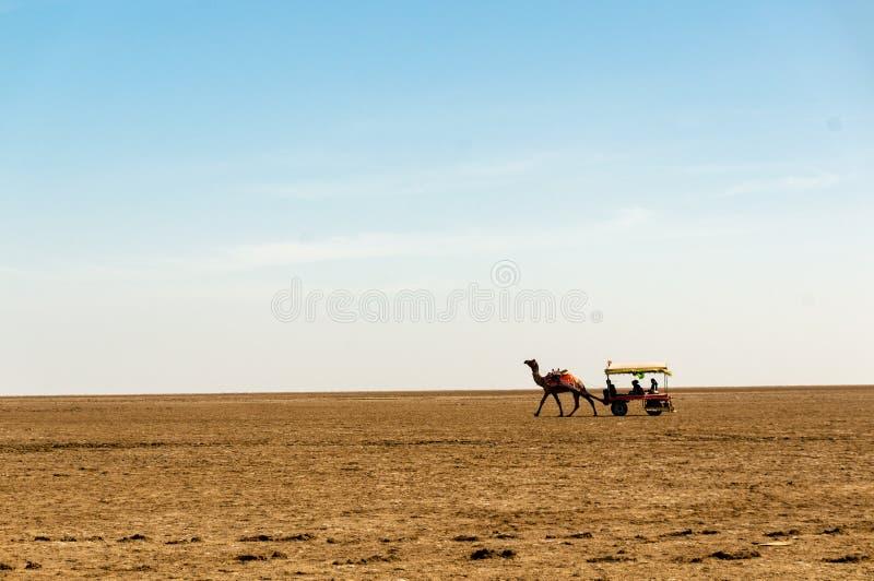 Kameelkar op de brede uitgestrektheid van Rann van Kutchh Gujarat India stock fotografie