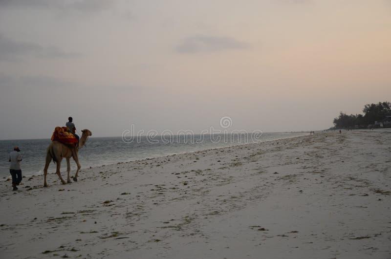 Kameelrit op het strand royalty-vrije stock afbeelding