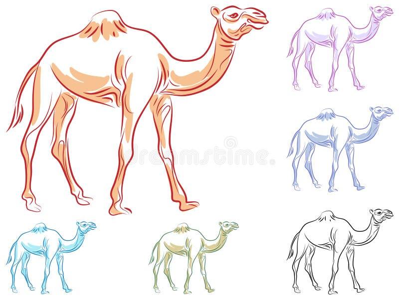 Kamel lizenzfreie abbildung
