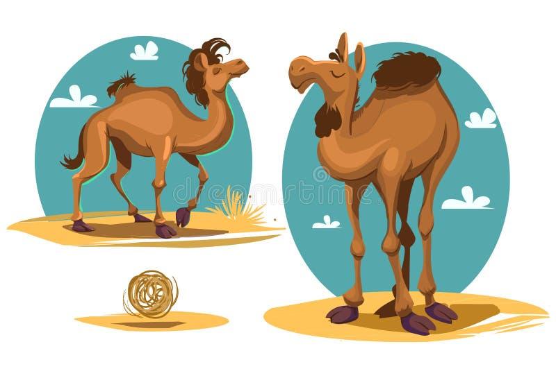 Kamel vektor illustrationer