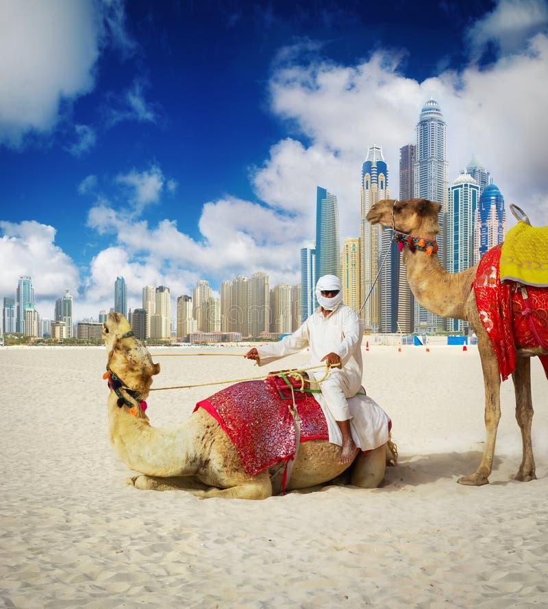 Kamel auf Dubai-Strand lizenzfreie stockfotos