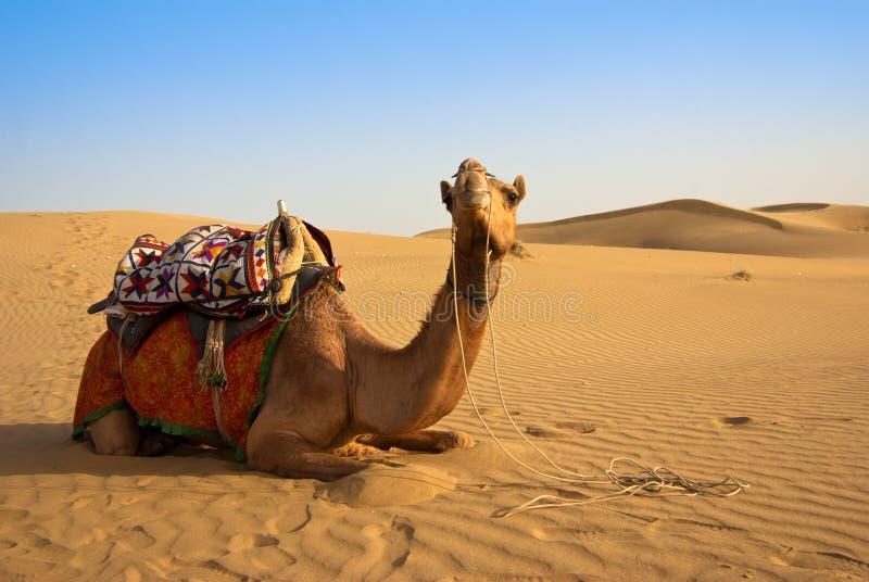 Kamel auf einer Wüste stockbild