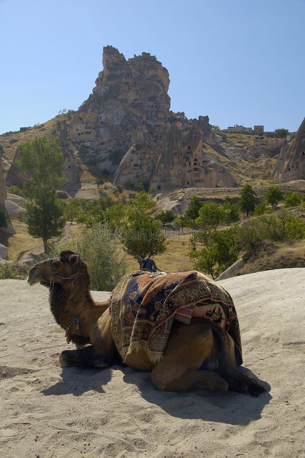 Download Kamel in Cappadocia stockbild. Bild von gebäude, fort, zitadelle - 38495