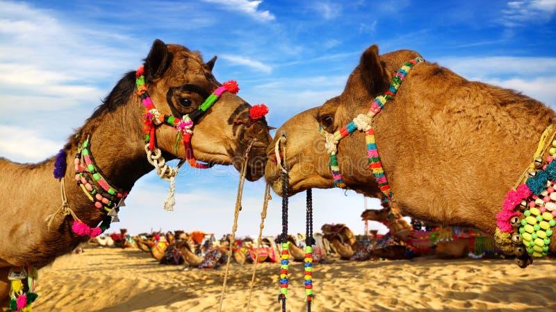 Kamel-Festival in Bikaner, Indien lizenzfreie stockfotos