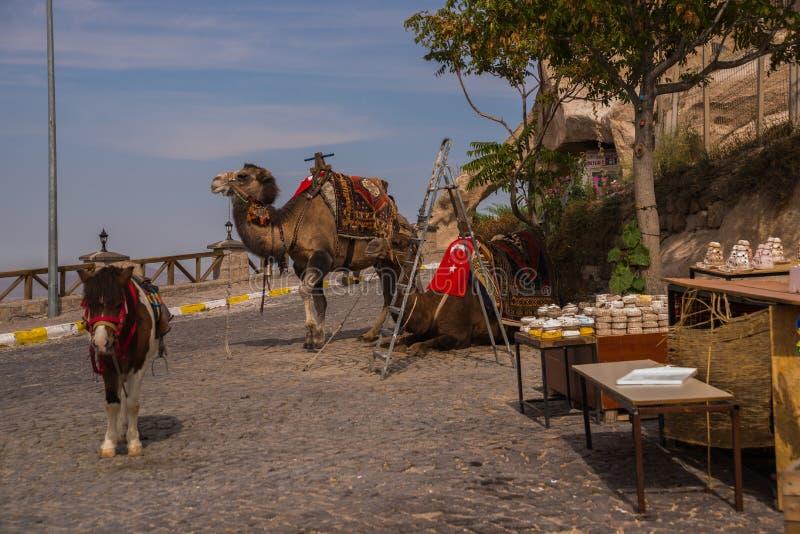 Kamel i Cappadocia Turkiet, Uchisar Underhållning och semester i Cappadocia Turkiet Denna är den traditionella aktivitetsridningk arkivbild