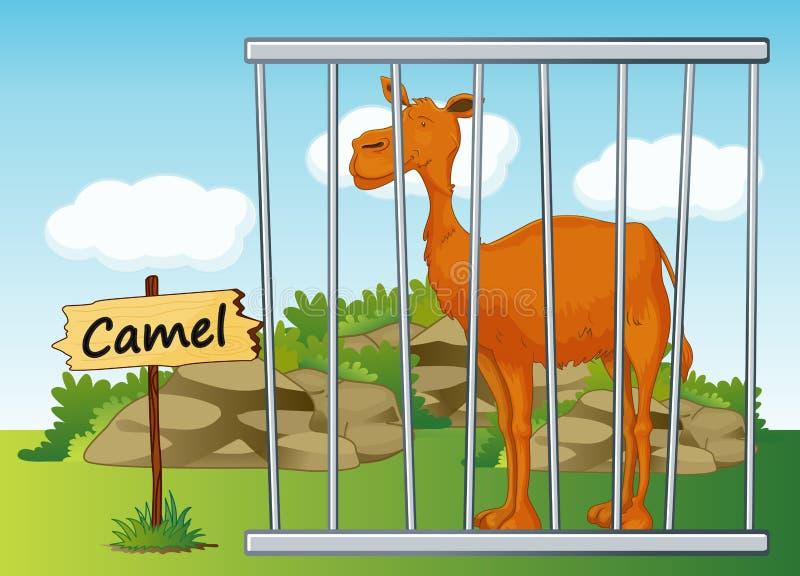 Kamel im Käfig lizenzfreie abbildung