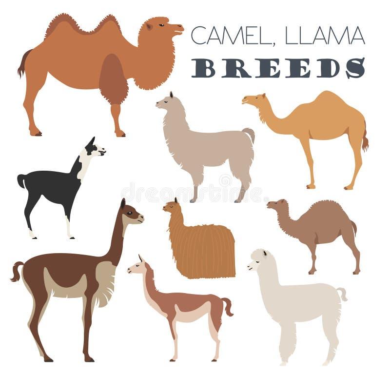 Kamel, Lama, Guanaco, Alpaka züchtet Ikonensatz Tierlandwirtschaft lizenzfreie abbildung