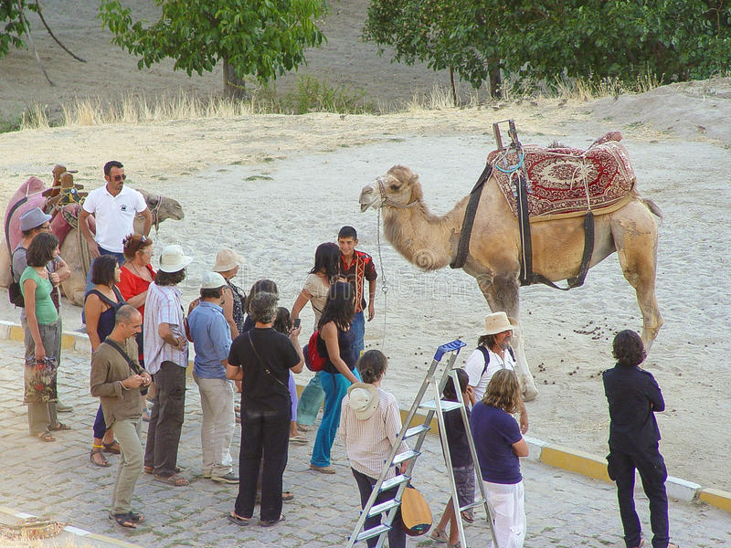 Kamel mit cappadocia Felsenlandschaften in der Türkei lizenzfreies stockfoto
