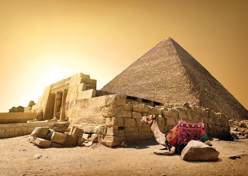 Kamel och förstörd pyramid royaltyfria foton