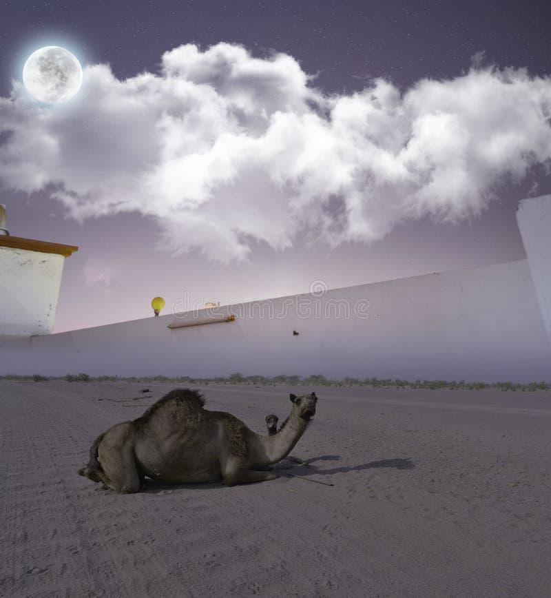 Kamel och hennes son i öknen på natten royaltyfri bild