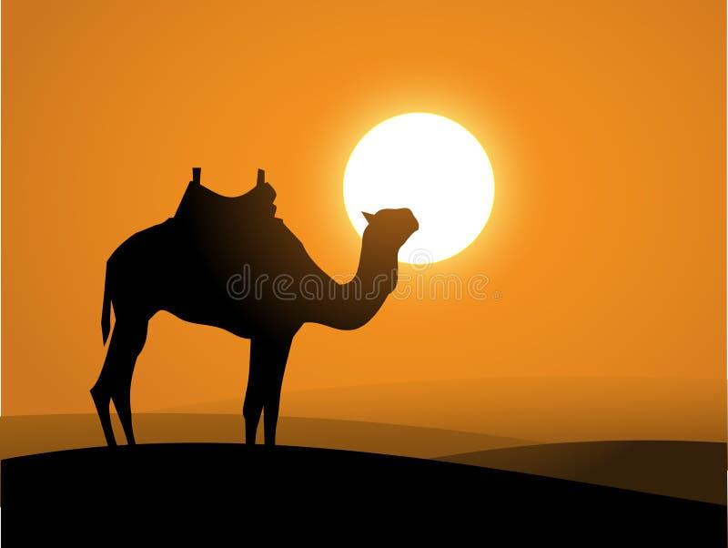 Kamel på öknen över solnedgångvektorn stock illustrationer