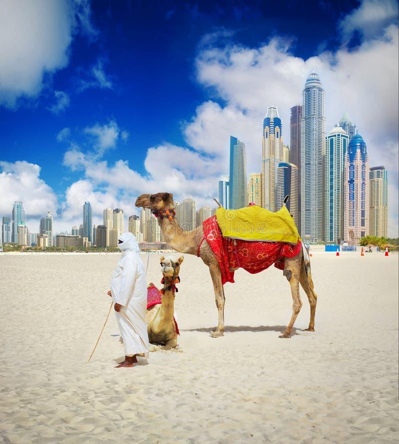 Kamel på den Dubai stranden royaltyfri fotografi