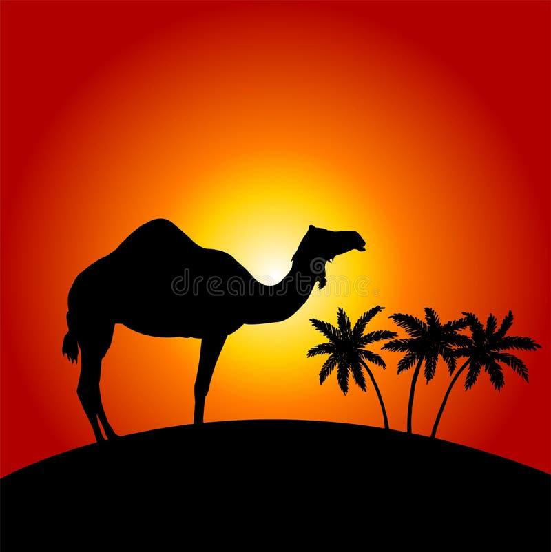 Kamel på solnedgångbakgrunden stock illustrationer