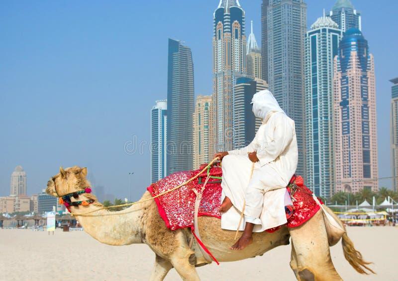 Kamel på strand fotografering för bildbyråer