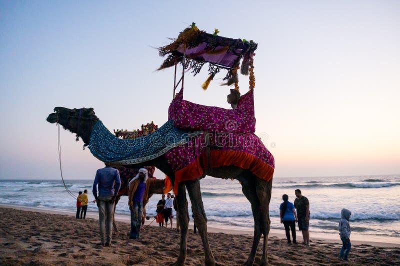 Kamel på stranden med en hatt, girlander och en palanquin royaltyfria foton