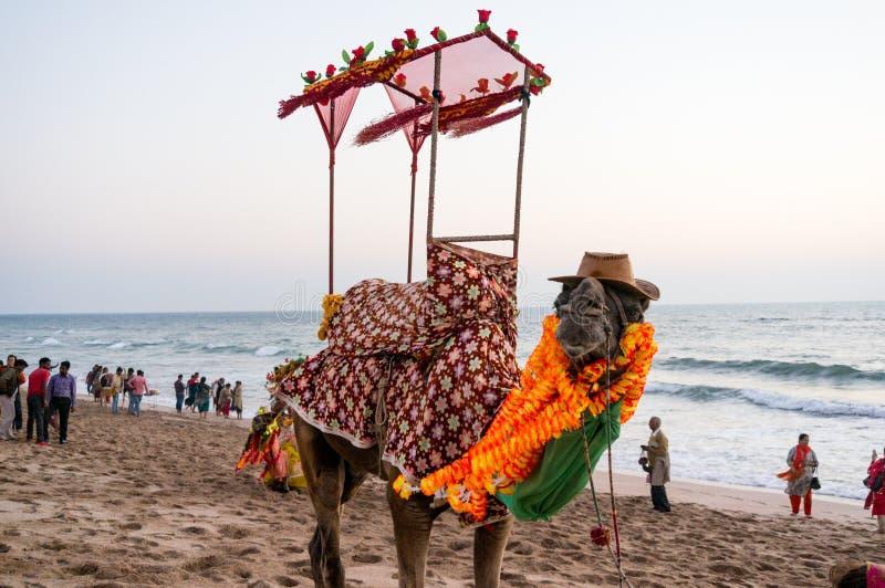 Kamel på stranden med en hatt, girlander och en palanquin arkivbild