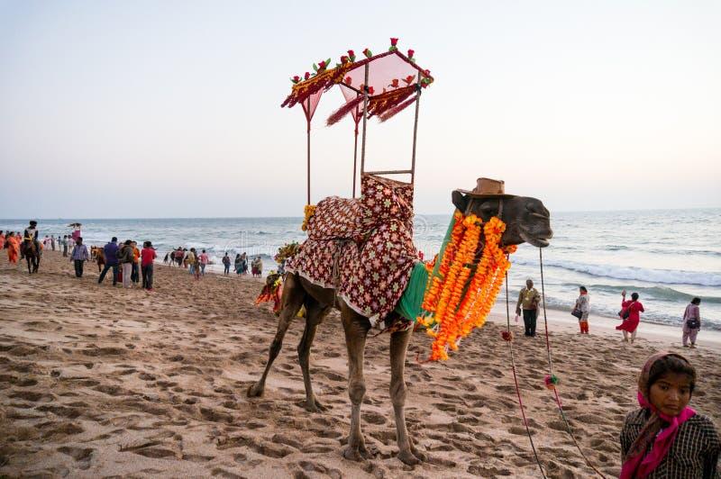 Kamel på stranden med en hatt, girlander och en palanquin fotografering för bildbyråer