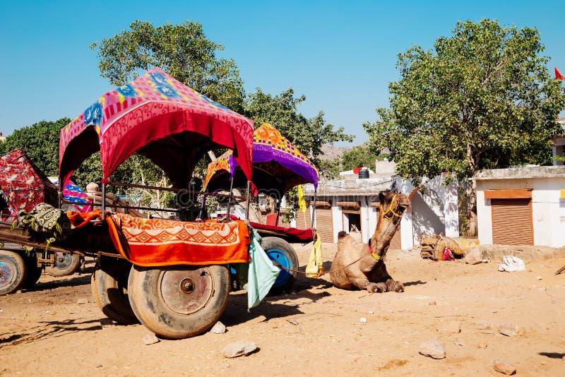 Kamel in Pushkar-Stadt, Indien stockbilder