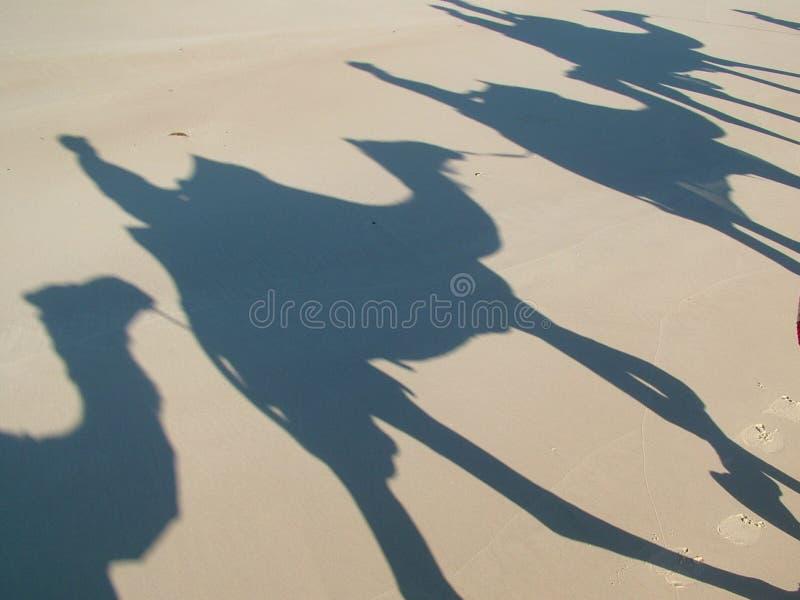 Kamel-Serie lizenzfreie stockfotografie