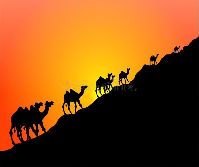 Kamel-Sonnenuntergang stock abbildung