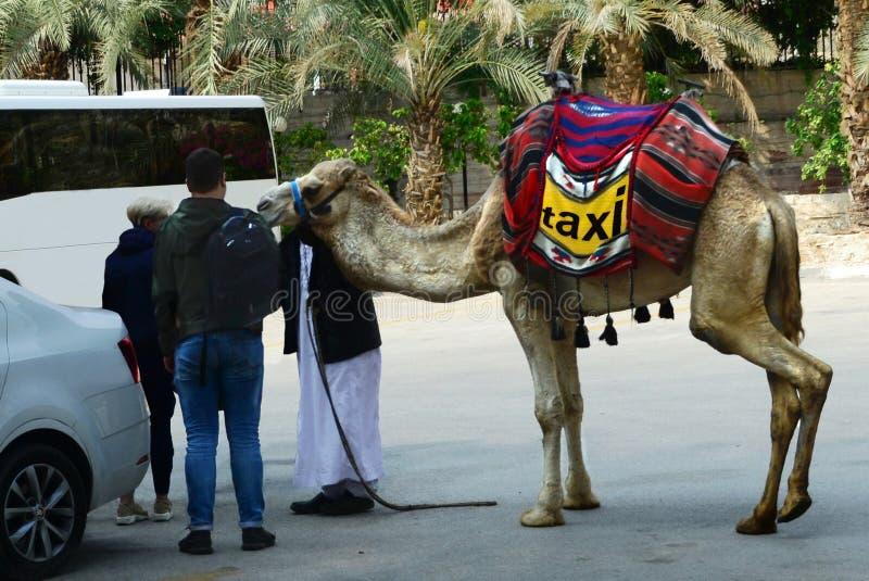 Kamel-taxi Hans chaufför & turister, turplanläggning royaltyfri foto