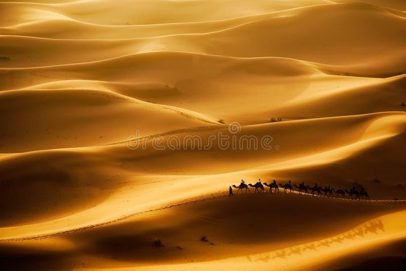Kamel-Wohnwagen lizenzfreie stockfotos