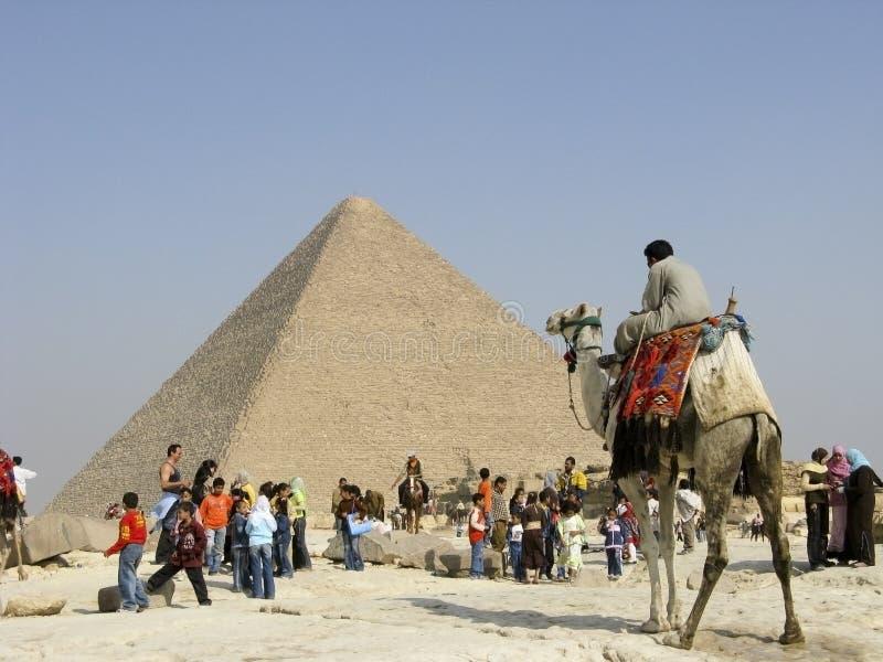 Kamel-Zufuhr in Giza stockbilder