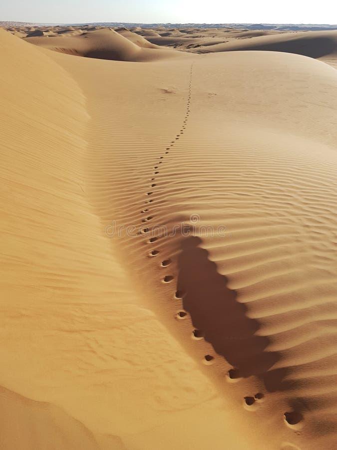Kamelabdrücke, die gehen, Horizont zu verlassen stockfotografie