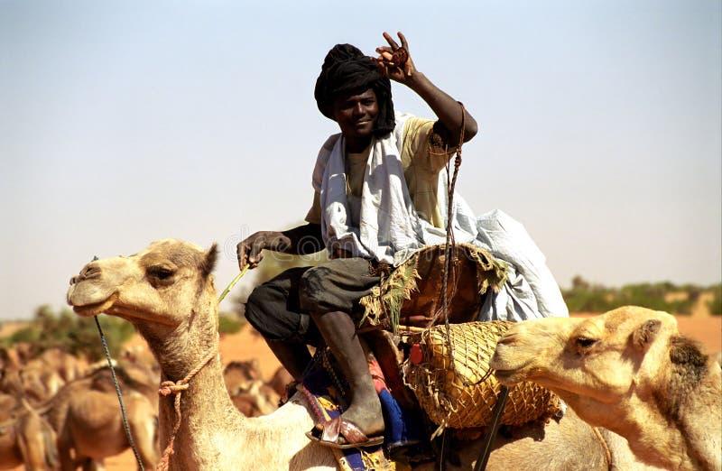 kamelchaufförmauritania tuareg arkivbilder