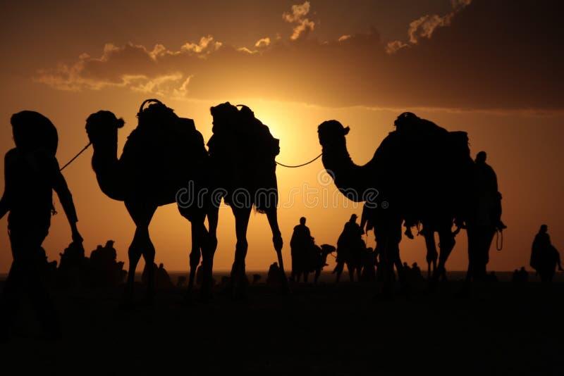 Kamele in einer Wüste lizenzfreie stockbilder