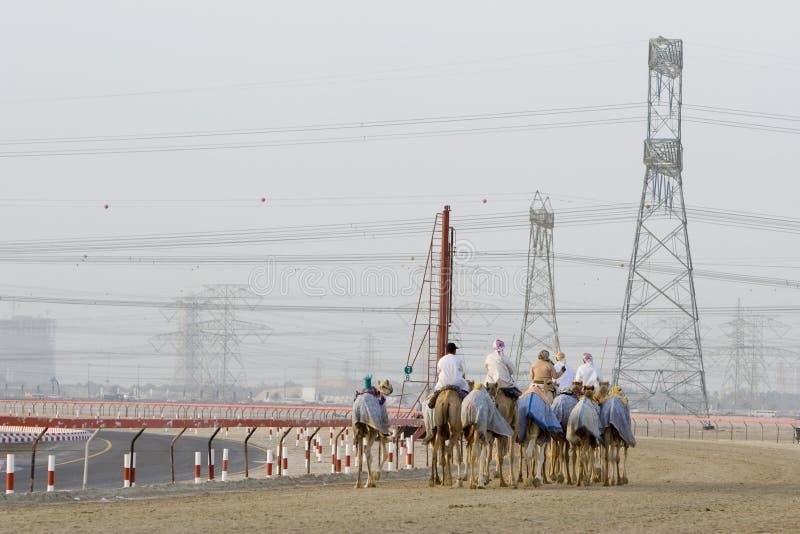 Kamele und Jockeys Dubais UAE, die an Nad Al Sheba Camel Racetrack bei Sonnenuntergang ausbilden lizenzfreies stockfoto