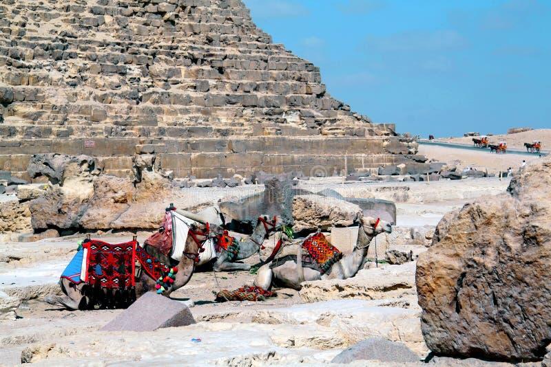 Kamelen die bij de Cheops-piramide zitten royalty-vrije stock foto's