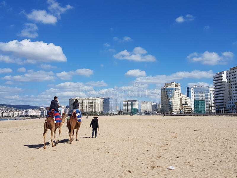 kamelen in het strand van Tanger stock fotografie